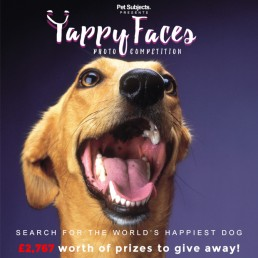 yappy-faces
